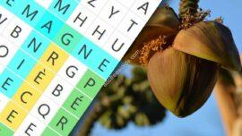 Mots Meles Fruits Et Legumes De Lile De La Reunion 270x152